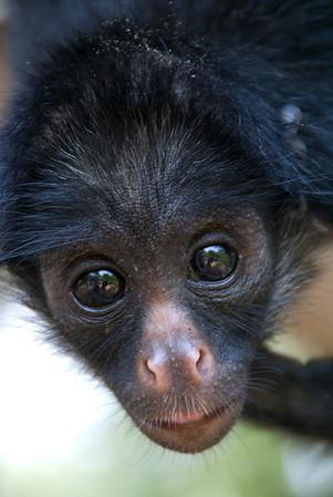 Monkey Island in the Amazon