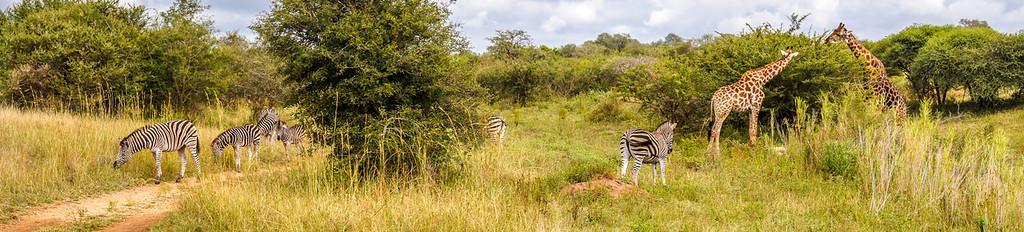 Kapama, South Africa